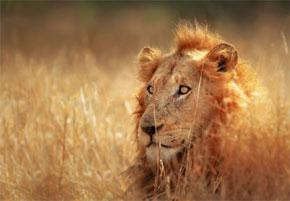 Luxury African Safaris